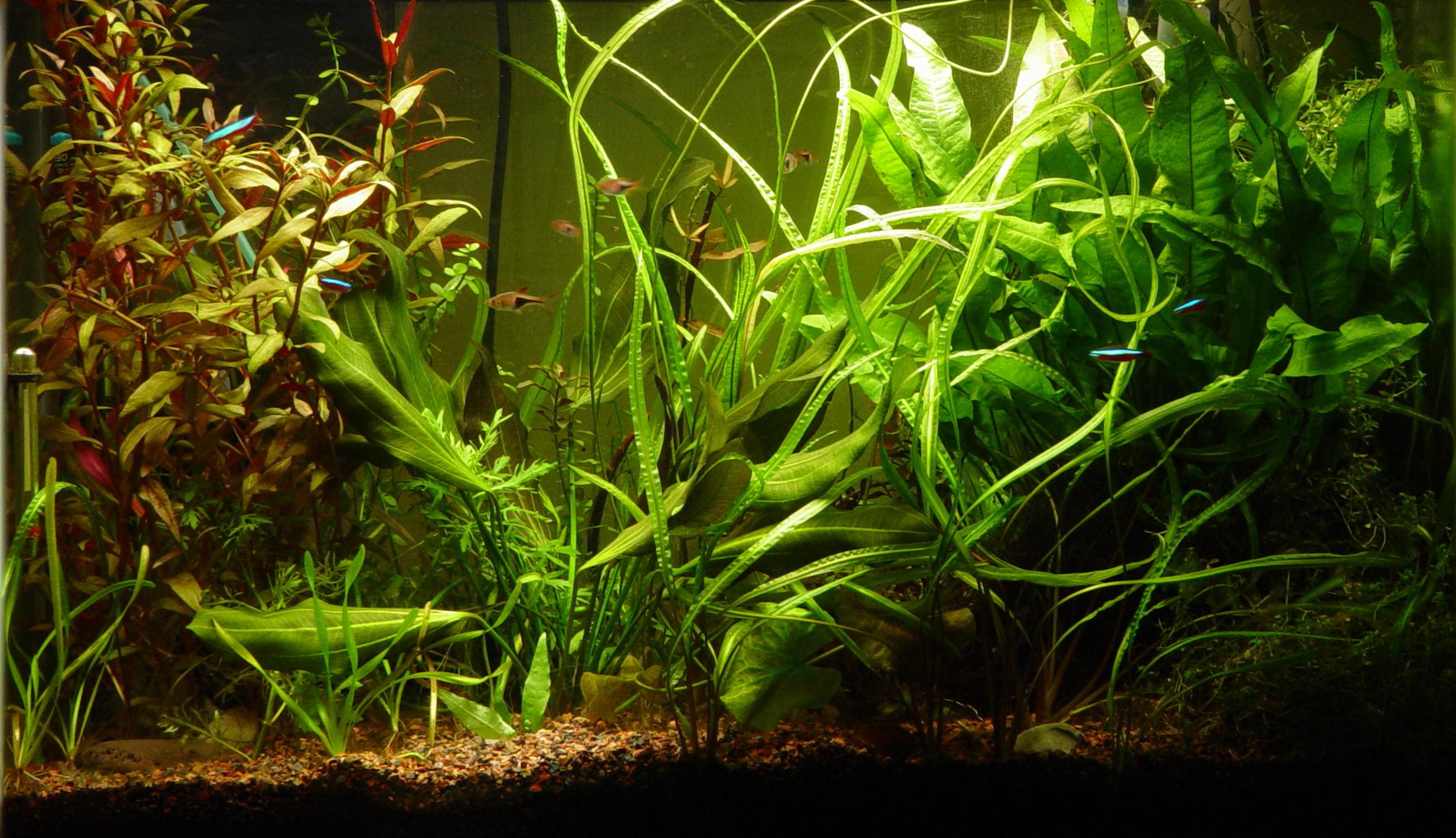 2467 x 1420 - Aquarium hintergrund ausdrucken ...